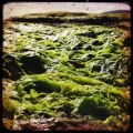 schottland-20130041